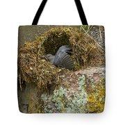 American Dipper In Nest   #1468 Tote Bag