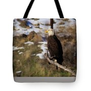 An Eagle Perched   Tote Bag