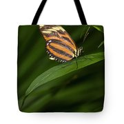 An Isabella Butterfly Eueides Isabella Tote Bag