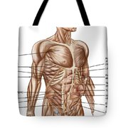 Anatomy Of Human Abdominal Muscles Tote Bag