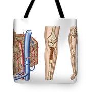 Anatomy Of Human Bone Marrow Tote Bag