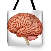 Anatomy Of Human Brain, Side View Tote Bag