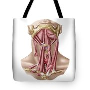 Anatomy Of Human Hyoid Bone Tote Bag