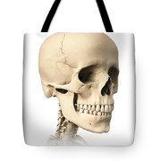 Anatomy Of Human Skull, Side View Tote Bag