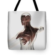 Anatomy Of Male Muscles In Upper Body Tote Bag by Stocktrek Images