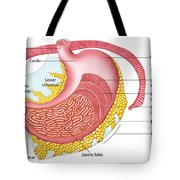 Anatomy Of The Human Stomach Tote Bag