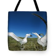 Antipodean Albatross Courtship Display Tote Bag by Tui De Roy