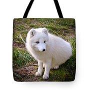 Arctic White Fox Tote Bag