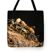 Army Ant Carrying Cricket La Selva Tote Bag