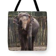 Asian Elephant Tote Bag
