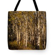Aspen Forest In Fall Tote Bag