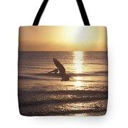 Australian Pelican Glides At Sunrise Tote Bag