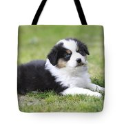 Australian Shepherd Puppy Tote Bag