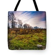 Autumn Morning Tote Bag by Davorin Mance