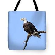 Bald Eagle 6 Tote Bag