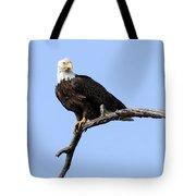 Bald Eagle 7 Tote Bag