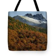 Beech Forest, Chile Tote Bag