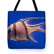 Bengal Cardinal Fish Tote Bag