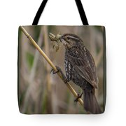 Big Dinner For Female Red Winged Blackbird I Tote Bag