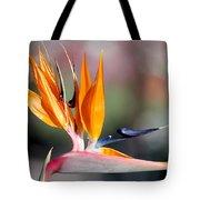 Bird Of Paradise  Tote Bag by Gunter Nezhoda
