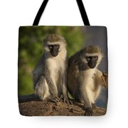 Black-faced Vervet Monkey Tote Bag