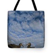 Black-footed Albatross Courtship Dance Tote Bag by Tui De Roy