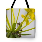 Black Garden Ant On Yellow Flower Tote Bag