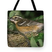 Black-headed Grosbeak Female Tote Bag