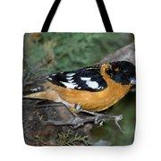 Black-headed Grosbeak Male Tote Bag