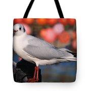 Black-headed Gull Tote Bag