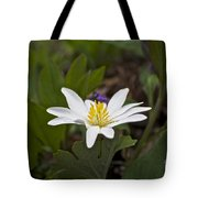 Bloodroot Wildflower - Sanguinaria Canadensis Tote Bag