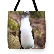 Blue Footed Boobie Dancing Galapagos Tote Bag