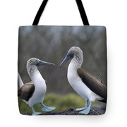 Blue-footed Boobies Courting Galapagos Tote Bag