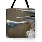 Blue-footed Boobies Tote Bag