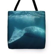 Blue Whale  Sea Of Cortez Mexico Tote Bag