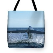 Blue Whale Tail Sea Of Cortez Tote Bag