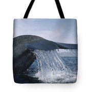 Blue Whale Tail Sea Of Cortez Mexico Tote Bag