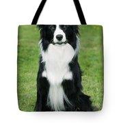 Border Collie Dog Tote Bag