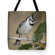 Bridled Titmouse Tote Bag