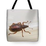 Broad-nosed Weevil - Polydrusus Mollis Tote Bag
