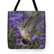 Broad-tailed Hummingbird Tote Bag