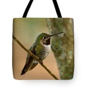 Broad Tailed Hummingbird Tote Bag