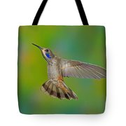 Brown Violet-ear Hummingbird Tote Bag