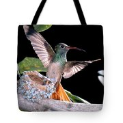 Buff-bellied Hummingbird At Nest Tote Bag