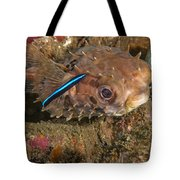 Burrfish And Cleaner Goby Tote Bag