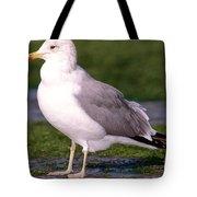 California Gull Tote Bag