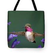 Calliope Hummingbird Stellula Calliope Tote Bag