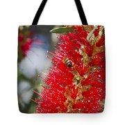 Callistemon Citrinus - Crimson Bottlebrush Tote Bag