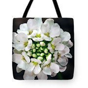 Candy Tuft Tote Bag