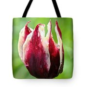 Candy Tulip Tote Bag